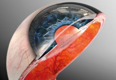 Eye cross-section_VORSCHAU
