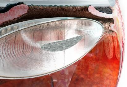 The crystalline lens_VORSCHAU