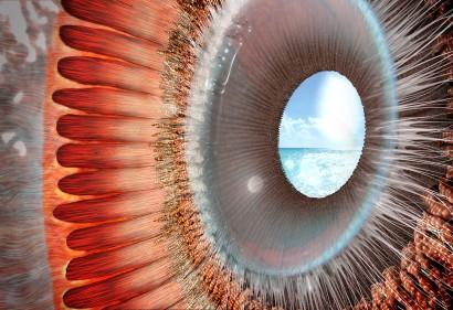ora serrata_ciliary body and zonular fibers_VORSCHAU